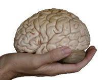 brain_chemistry-thumb